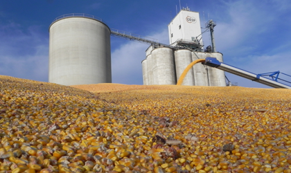 How Much Will The Corn And Soybeans Yield In 2013?