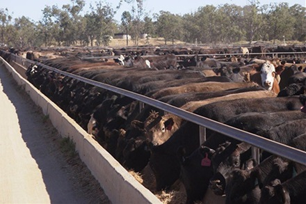 Cattle on feed numbers rise