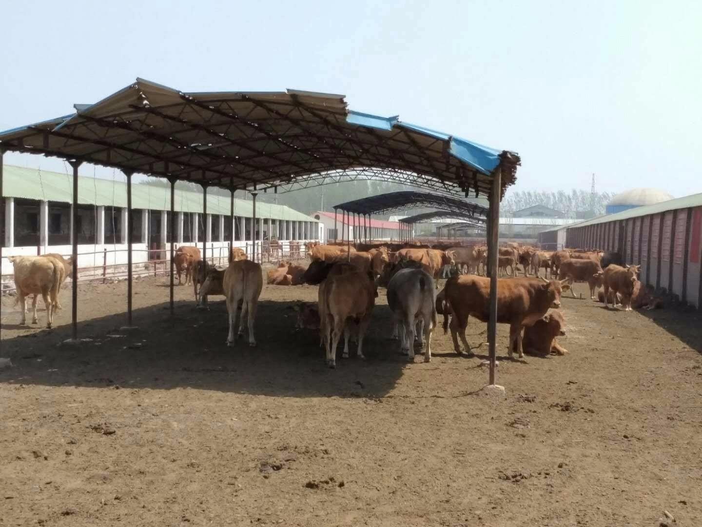 珲春市民宗局以包保村三家子满族乡八连城村贫困户发展需求为导向,不