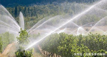 做滴灌的一些基础知识,它可做到节水灌溉!