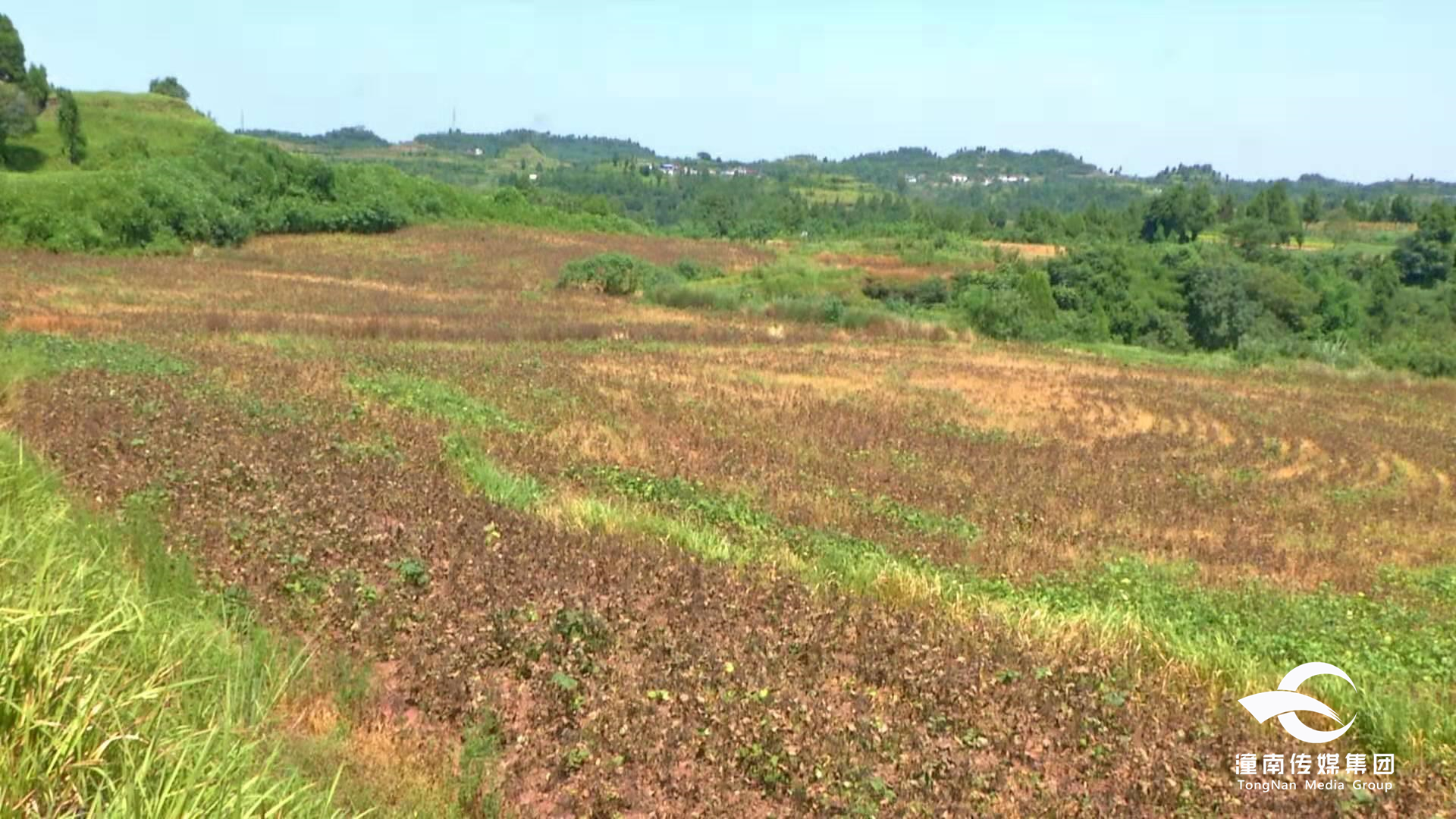 每亩增收600元以上 潼南全程机械化种植绿豆通过测产